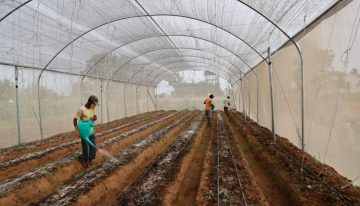 Greenhouses store- make your passion as your source of income
