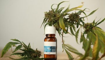 CBD Cream – Facts You Need to Know